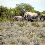 tag10_Elefantenfamilie