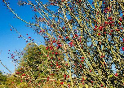 Herbstfrüchte im Westerwald