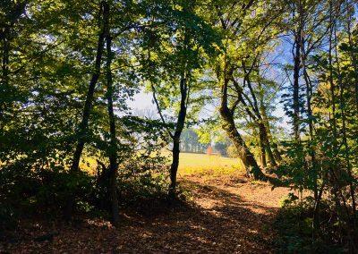 Im Hachenburger Forst