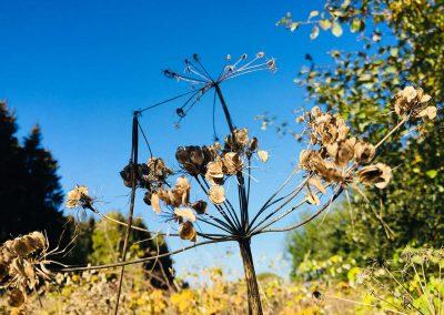 Pflanze am Wegesrand bei Alpenrod