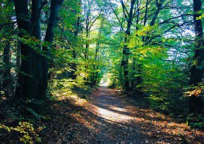 Weg zur Alpenroder Hütte von Hachenburg