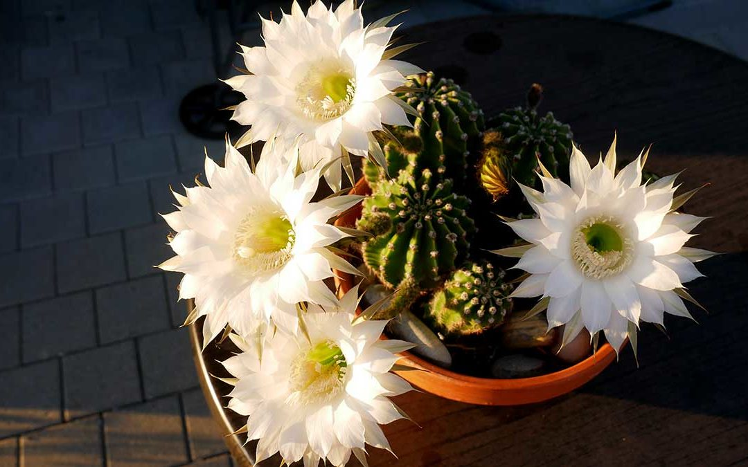 Es war einmal ein Kaktus
