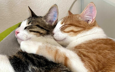 How two cats saved my life